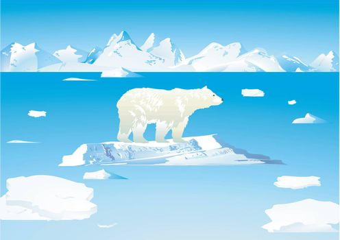 Polar bears and icebergs