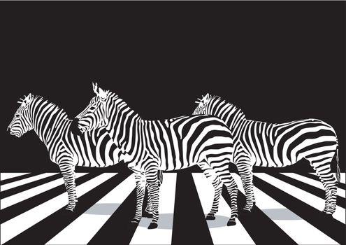 Zebra on pedestrian crossing