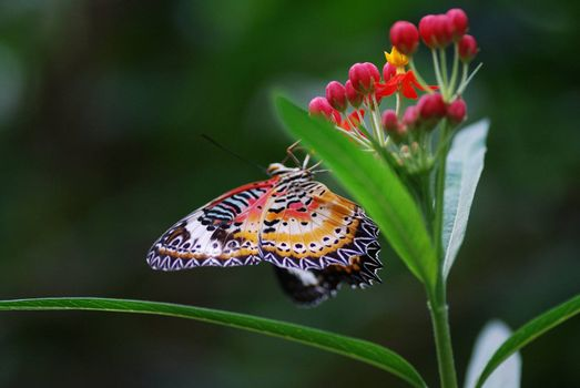 beautiful color colorful beautiful butterfly sitting on flower