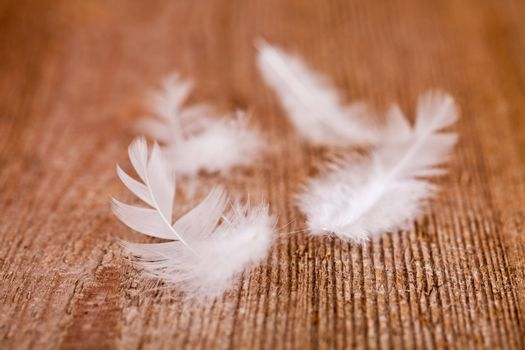 white downy feathers