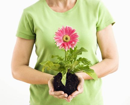 Portrait of woman standing holding pink gerber daisy plant.