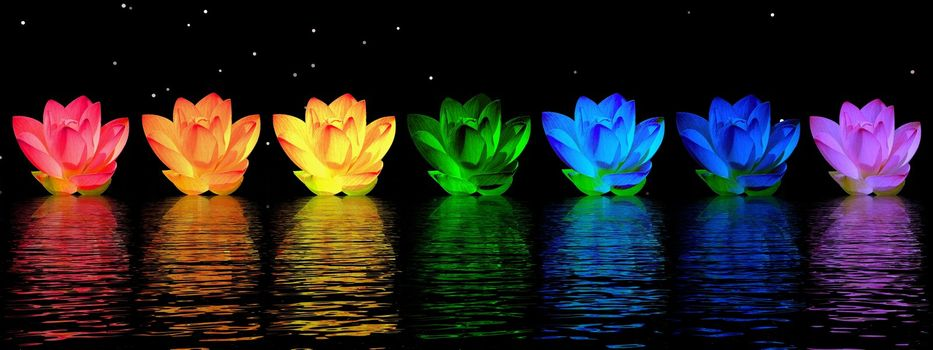 Chakra colors of lily flower upon water in night background