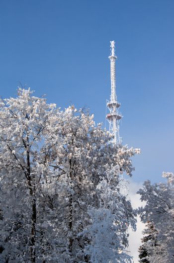 winter landscape with television antenna and trees