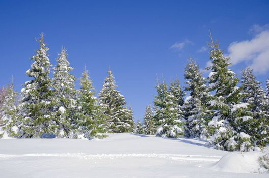 winter snow covered fir trees on mountainside on blue sky background