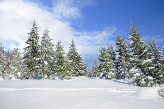 Beautiful winter mountainside landscape with snow covered pine trees and nice blue sky