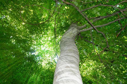lower view sun rays tree