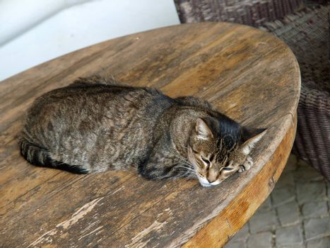 The charming, gray kitten during sleep