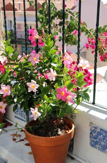 Terrace with flowers