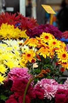Fresh flowers on Salamanca Market , Tasmania, Australia.