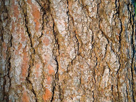 Evergreen Tree Bark Background
