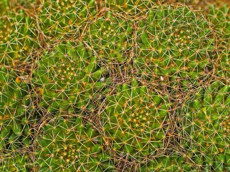 Cactus Macro Textures Ouch