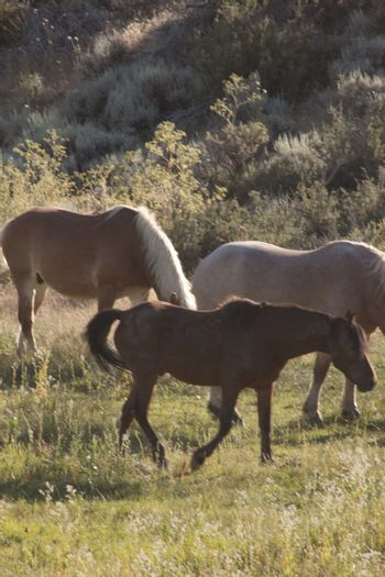 Beautiful horses in a pasture eating grass and hanging out with other horses.