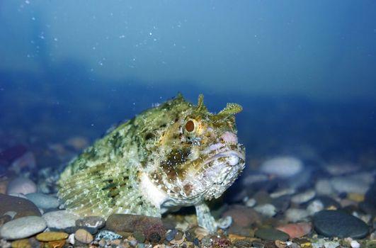Terrible fish