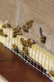 beehive bee hives