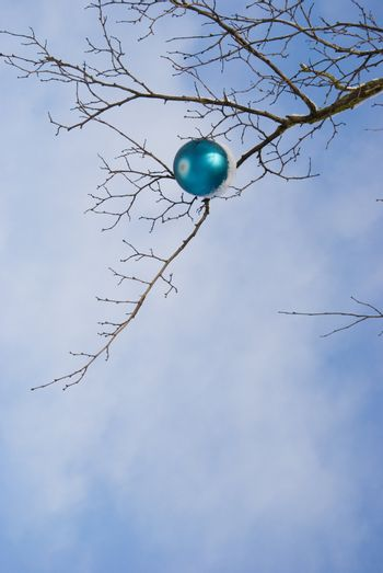 Lonely blue christmas toy covered with snow hanging on tree without leaves.