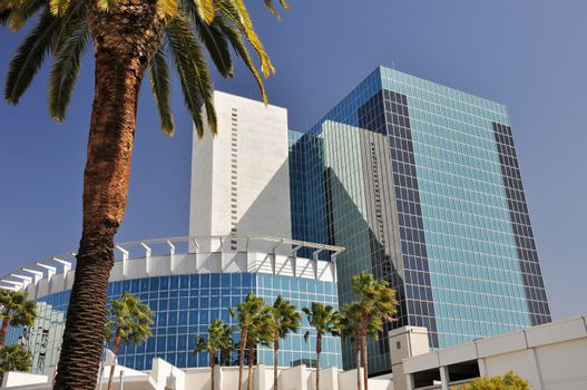 Palm trees and glass towers
