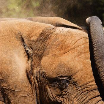 Elephant Dirt Bath