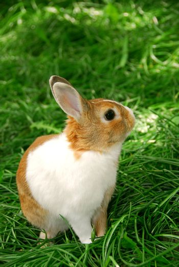 Cute easter bunny sitting on green grass outside