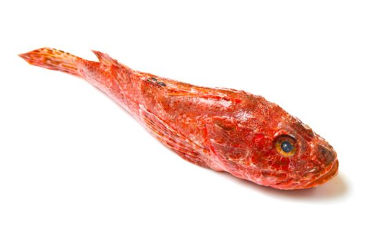 Redfish isolated on white background