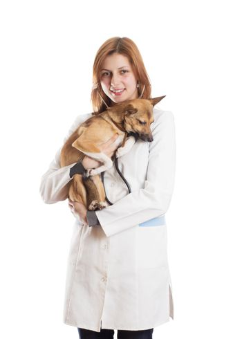 veterinarian woman listening through a stethoscope puppy on a white background isolated