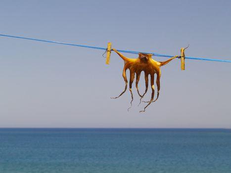 cuttlefish conservation