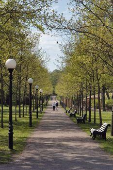 Avenue in park