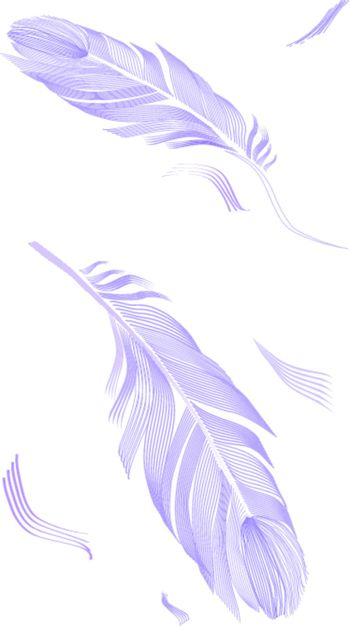 drawing bird feather