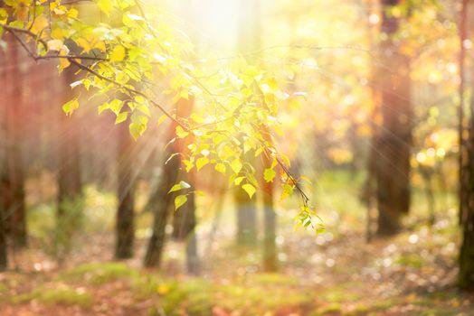 Autumn. Fall