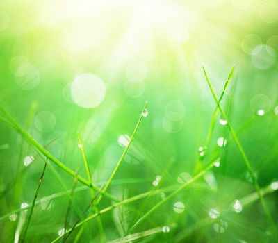 Grass with Morning Dew Drops closeup. Abstract Nature Background