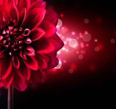 Dahlia Flower Design over Black Background
