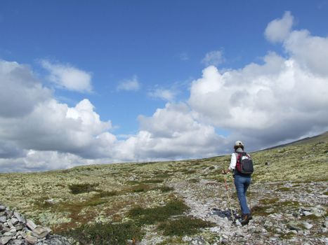 Woman hiking in the wilderness of a national park - Rondane - Norway