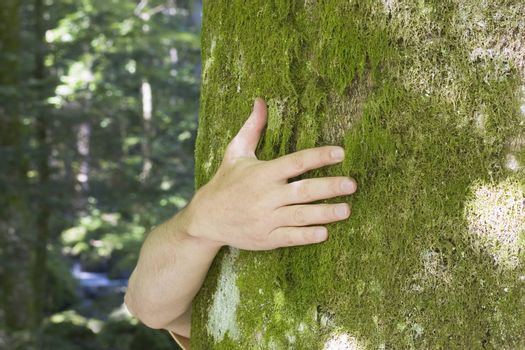 Hand hugging a mossy tree with blurred background of a forest and a creek