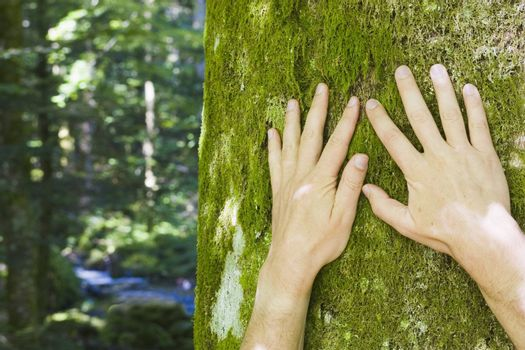 Two male hands touching a tree with moss. In the blurred background you can see a forest with a river.