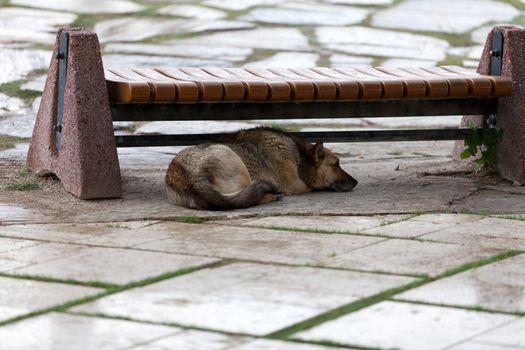 dog hiding before the rain
