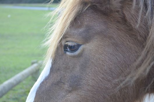 Close up of thoughtful brown horse face