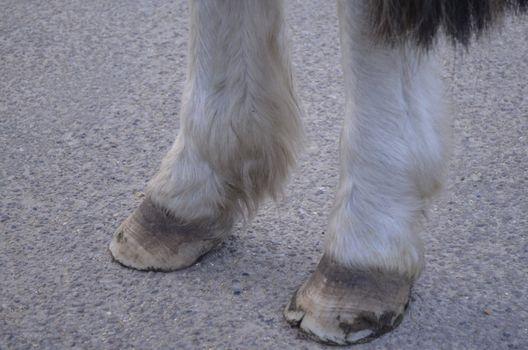 Wild horses hooves on concrete road