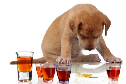 Puppy fatigue