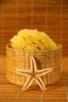 Sea sponge and starfish