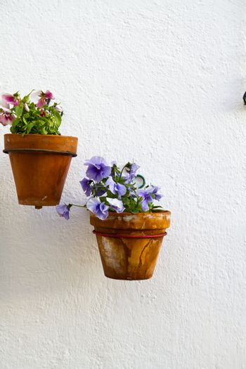 Spanish wall with beautiful plants. Andalusian flowerpot