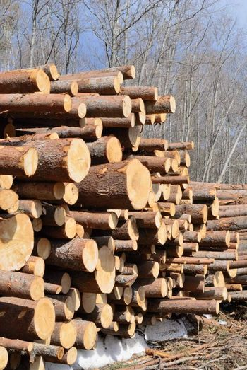 Cut and chopped wood are stacked in a heap