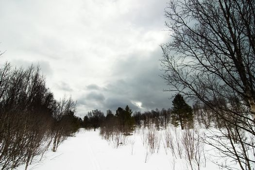 A spooky contrast filled winter landscape