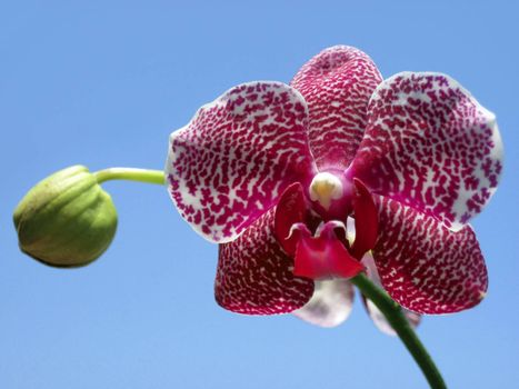purple and white orchid against the blue sky