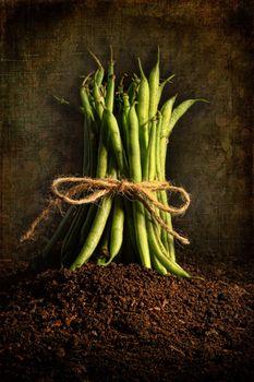 Fresh green beans tied against grunge background