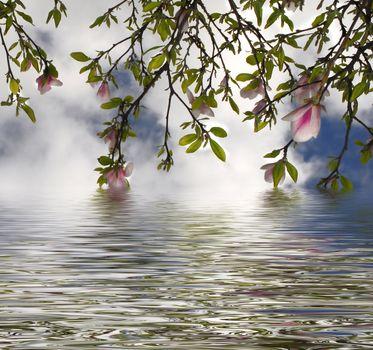 flowering tree reflected in water