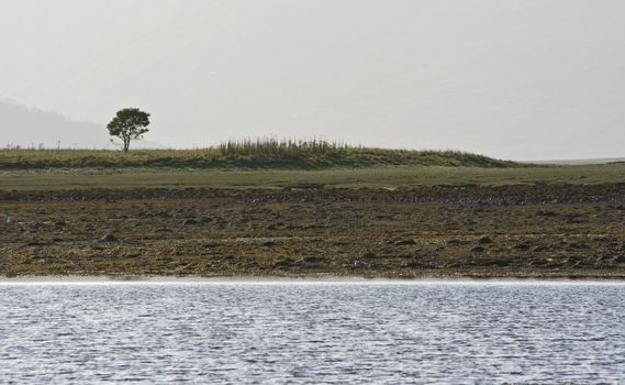 coastline with single tree in scotland