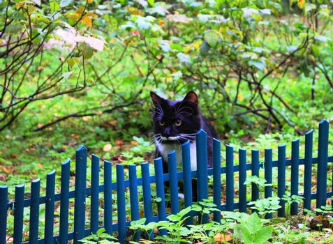 black and white predator cat near fence
