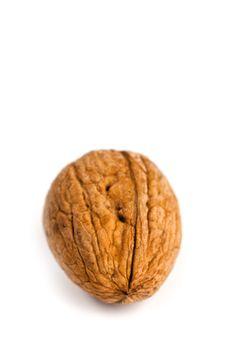 single fresh walnut