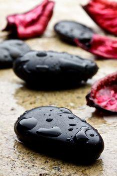 wet black stones and petal