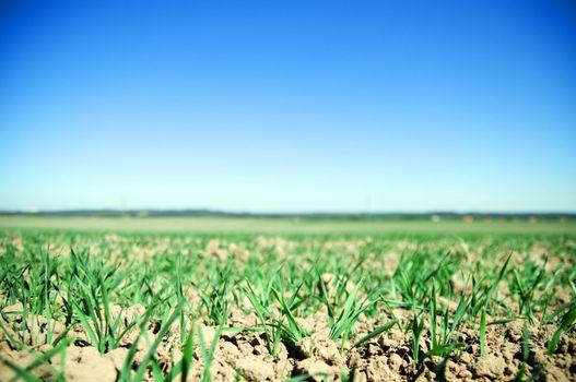 Plain field lanscape