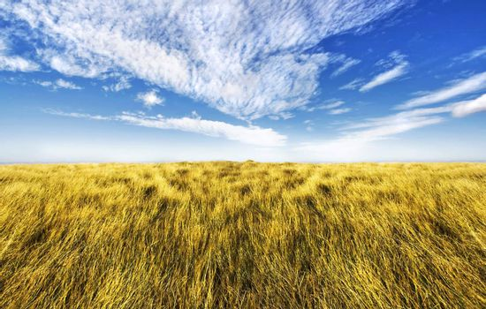 Beautiful altitude horizon with blue cloudy sky and vivid yellow high grass.